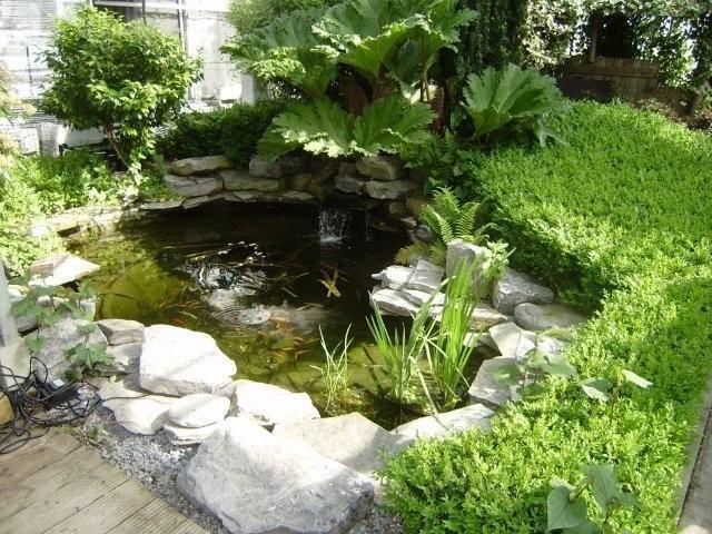 Bloem- tuin- en vijvercenter Defever bvba - Vijver