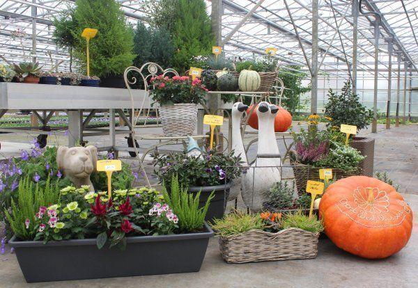 Tuincentrum Vandeputte - Herfstplanten