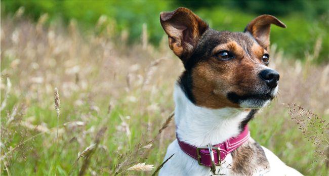 Horta Dejonckheere - hondenvoeding