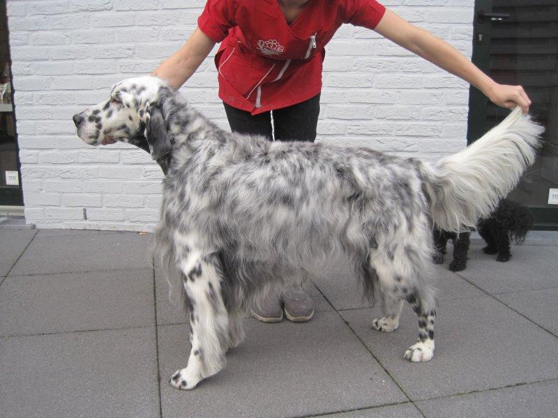 Animals Beauty Centrum