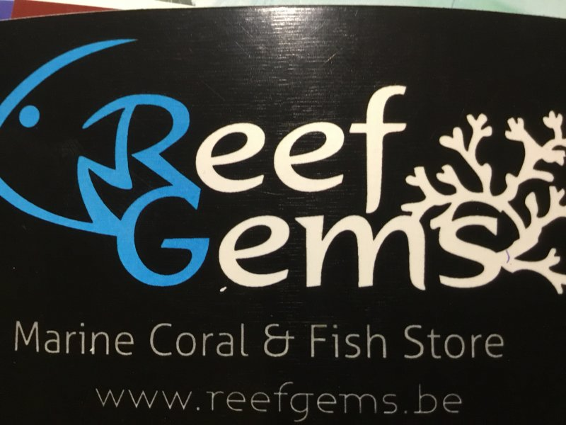 Reef Gems