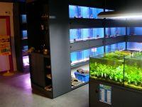 Aquarium modern