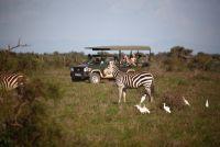 Zebra's spotten tijdens een safari