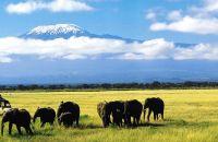 Olifanten nabij de Kilimanjaro