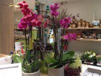Orchidee�n