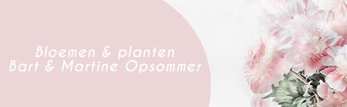 Bloemen en planten Bart & Martine Opsommer -Delaplace