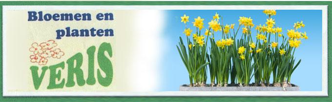 Van Langenhove bvba - Bloemen en Planten Veris
