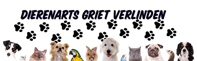Dierenarts Griet Verlinden