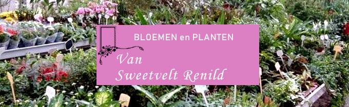 Bloemisterij Van Sweevelt