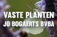 Vaste Planten Jo Bogaerts bv