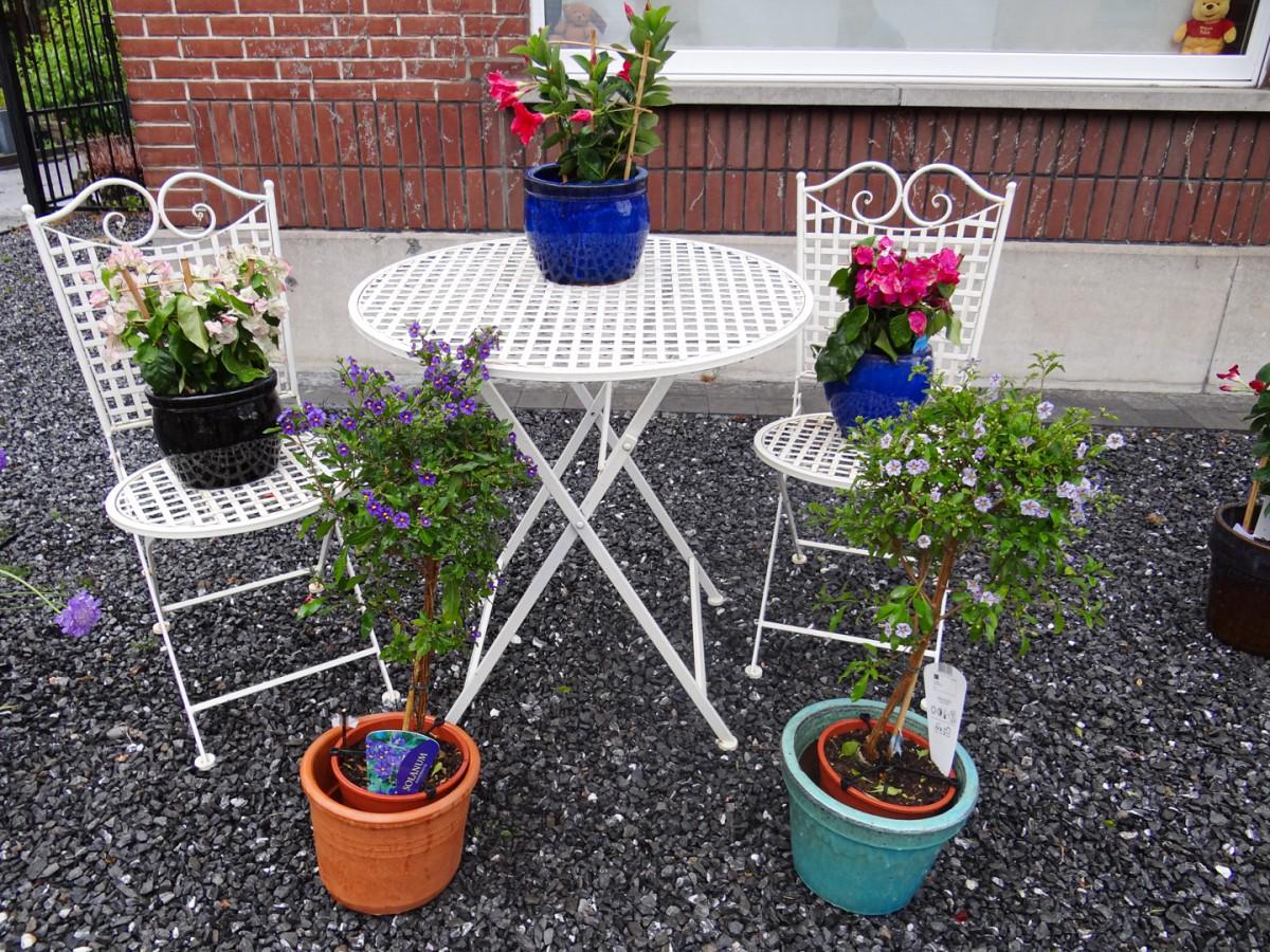 Bloemen en Tuindecoratie Mimosa