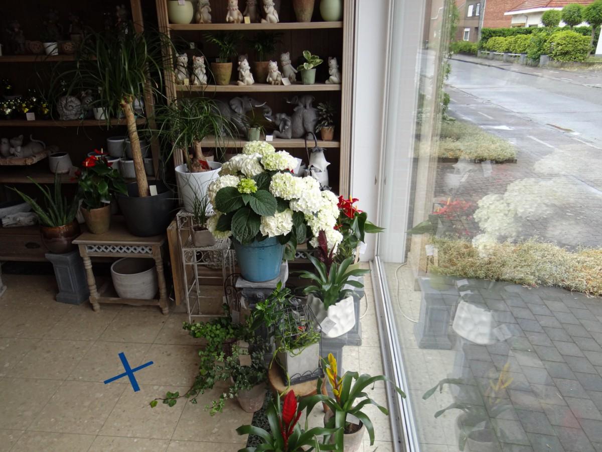 Bloemen en Planten voor binnen