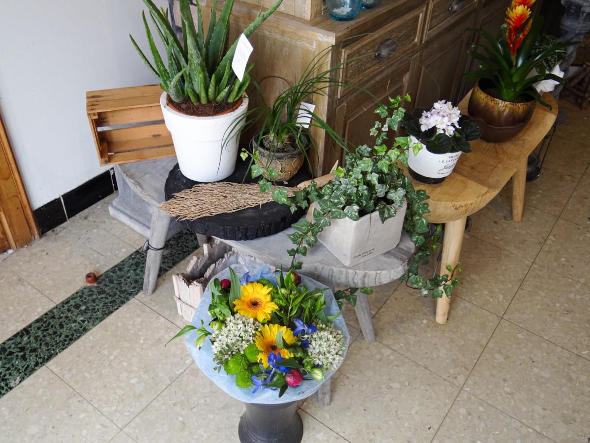 Snijbloemen en planten