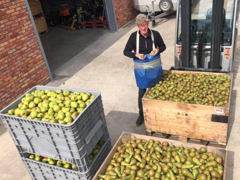 Nieuwe oogst peren