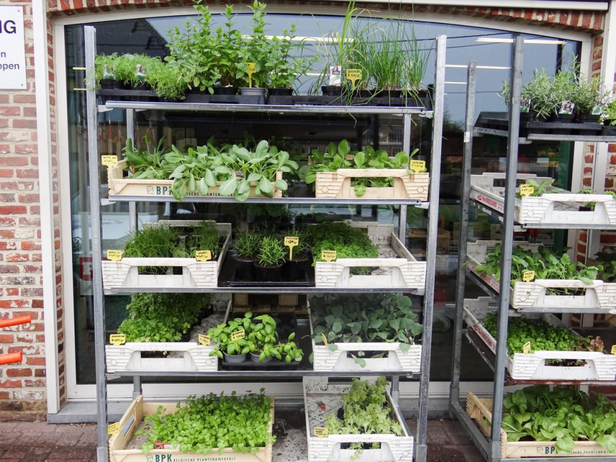 Groenteplanten en kruiden
