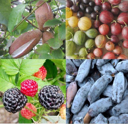 Bessenstruiken en fruitbomen