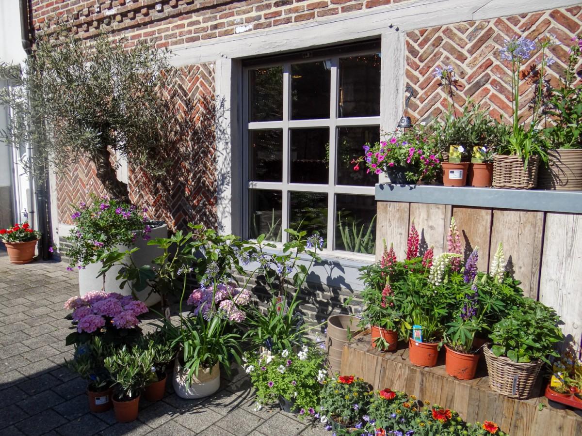 Bloemen en planten in volle bloei