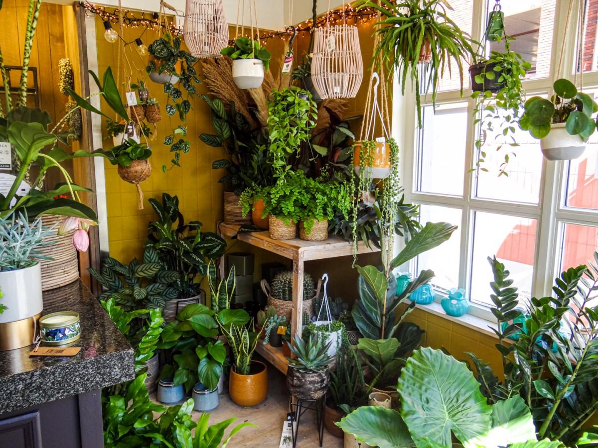 Planten voor huis en tuin