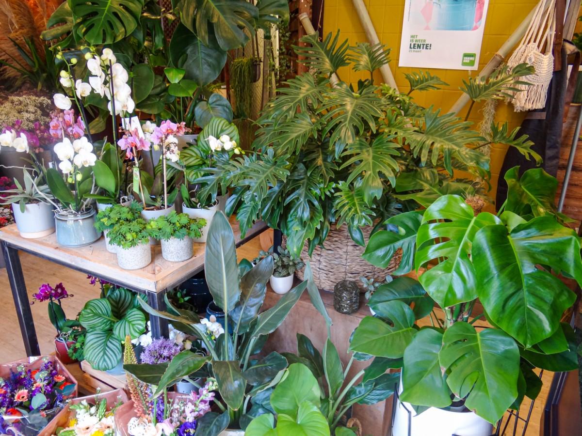 Planten in sierpotten