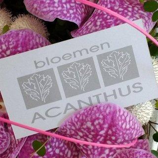 Bloemen Acanthus
