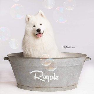 Royals Hondentrimsalon