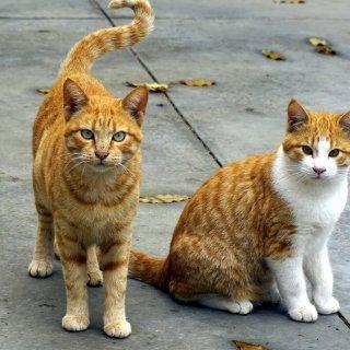 Kleine huisdieren kunnen terecht bij Dierenartsenpraktijk Helena Brône & Elisabeth Bonte Sint-Niklaas
