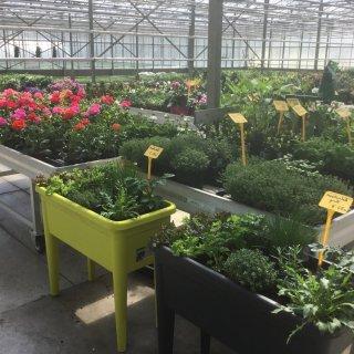 Tuincentrum Vandeputte