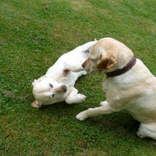Honden- en kattenverzorging Leona