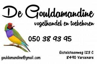Gouldamandine