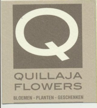Quillaja Flowers nv
